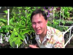 thumbs up :p kind of obnoxious, but lots of good info. Tropical Perennial Vegetable Gardening in Haw Organic Gardening, Gardening Tips, Vegetable Gardening, Hawaiian Gardens, Tropical Nursery, Perennial Vegetables, Florida Gardening, Replant, Edible Garden