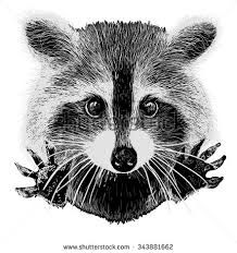 Картинки по запросу cartoon raccoon