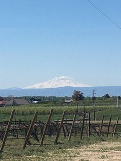 Beautiful view of the mountain. from Bonair Winery - Zillah, WA, United States. For more information about this winery and our extensive guide to the best USA wineries, winery weddings, as well as information about wine, visit: http://www.allaboutcuisines.com/wine #Wineries Yakima Valley