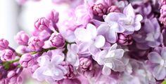 Už kvetou. Omamné šeříky začaly rozvíjet své bohaté hrozny květů a ulice naplňovat omamnou vůní. Stojí za to si je natrhat. Nejenom… Lilac Flowers, Purple Lilac, Orchids In Water, Happy Anniversary Wishes, Sailboat Painting, Design Floral, Newborn Baby Gifts, Heart Cards, Forest Wedding