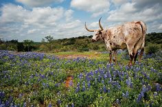 Texas Highways Top 40 Travel Destinations - No. 5 - The Hill Country. With a bounty of small towns, sparkling lakes and rivers, and wildflower-splashed pastures in spring, the Hill Country has inspired countless road trips for Texas travelers.
