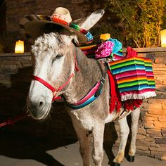 Tyler's surprise gift to Josh—a tequila donkey—treats guests to shots of the liquor