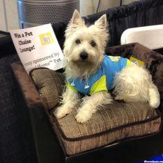 2013 Houston Pet Expo  #dog #westie #westhighlandwhiteterrier #amazingpetexpo