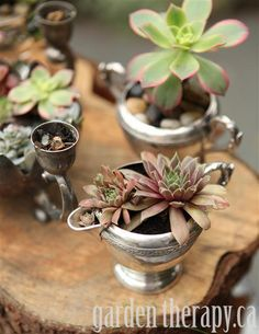 Dressing up vintage silver with cool succulents  Loving this...I have so many odd dented or chipped pieces of silver and porcelain I finally know what to do with them..