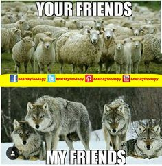 Dumbing Down People into Sheeple Lone Wolf Quotes, Of Wolf And Man, Funny Animals, Cute Animals, Wolf Spirit Animal, Wolf Stuff, Wolf Love, Wolf Pictures, Warrior Quotes