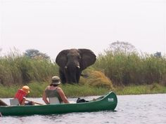Game viewing via boat cruise at chobe-marina-lodge