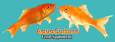Anfotal Nutritions is manufacturer of animal feed suppplement and feed additives for all poultry birds, fishes/ prawns and shrimps and all other livestock. We provide best nutrition product, Manufacturer Layer Premix India for animals and all supplements and additives are pure and we uses fresh  items to make these supplements