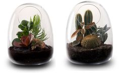Bring Nature Indoor: 11 Innovative Nature Inspired Designs