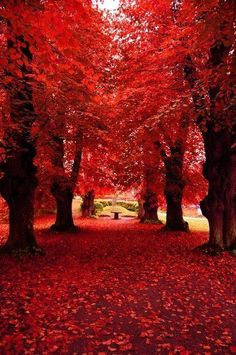 Such a beautiful red picturesque scene - we love it when the autumn leaves start… Beautiful Photos Of Nature, Nature Photos, Beautiful World, Beautiful Places, Beautiful Pictures, Red Pictures, Simply Beautiful, Red Tree, Fall Photos