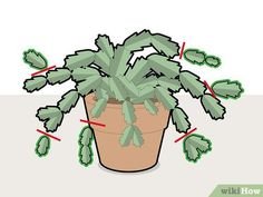 How to Prune a Christmas Cactus. Named after the time of year that they bloom in the Northern Hemisphere, Christmas cactus plants are beautiful and easy to maintain in the right conditions. The simple process of pruning can help grow a. Succulent Gardening, Cacti And Succulents, Cactus Plants, Garden Plants, House Plants, Indoor Cactus, Cactus Art, Cactus Flower, Potted Plants