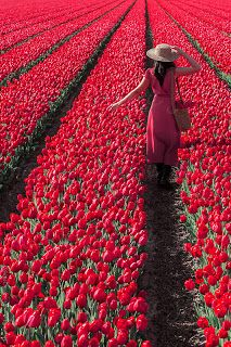 Young woman in a colorful flower field by Jovana Rikalo for Stocksy United Beautiful World, Beautiful Images, Beautiful Gardens, Beautiful Landscapes, Colorful Flowers, Beautiful Flowers, Tulip Fields, Girl Photography, Lady In Red