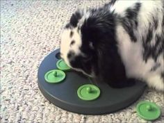 Bunny Logic 101 – Rabbits are Smart! | Bunny Approved – House Rabbit Toys, Snacks, and Accessories