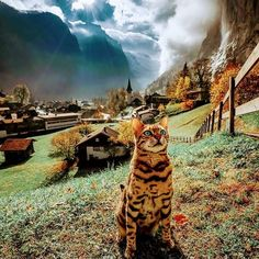 Cuteness Overload: Best Cats, Dogs and Cute Animals. — Another beautiful day in Cats paradise Submit. Bengal Cat Personality, Animals And Pets, Cute Animals, Grand Chat, Adventure Cat, Adventure Travel, Photo Chat, Tier Fotos, Wild Ones
