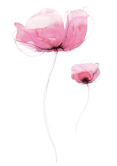 Toril Bækmark, tob0136, plakat, poster, CMYKkld Watercolor Cards, Watercolor And Ink, Watercolour Painting, Watercolor Flowers, Botanical Art, Art Floral, Flower Art, Line Art, Art Paintings