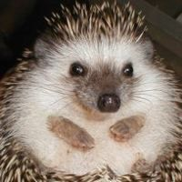 hedgehog rescue is available in Ohio.  Just thought you'd like to know!