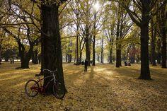 Tokyo by David Schwier, via 500px