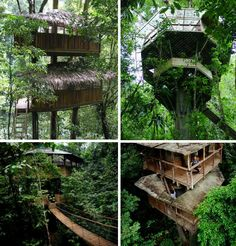 I could so live in a treehouse!