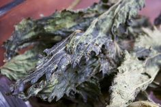 Stinging Nettle Chips Recipe-Reduce lemon by next time or increase nettles to 8 cups packed. 8 cups loose gives exactly 4 trays in the dehydrator. It only took 4 hours at 115 degrees. Nettle Recipes, Nourishing Traditions, Chips Recipe, Wild Edibles, Kale Chips, Edible Plants, Spring Recipes, 4 Hours, Canning Recipes