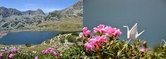 Calatoriile unui cocor - Muntii Retezat Origami, Journey, Mountains, Paper, Garden, Nature, Travel, Garten, Naturaleza
