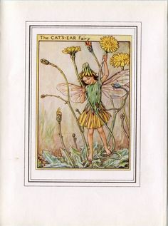 Cat's-Ear Flower Fairy Vintage Print, c.1950 Cicely Mary Barker Book Plate Illustration by TheOldMapShop on Etsy