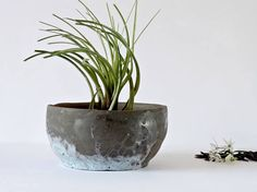 Ceramic Planter Bowl Modern Ceramics Modern Planter Desk