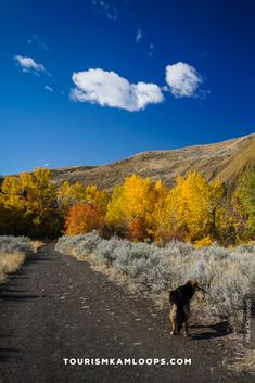 Spend crisp fall days walking Kamloops' trails with golden hues of autumn. Here are 5 accessible trails ideal for the whole family - strollers included. Sunset Valley, Salmon Run, Riverside Park, River Trail, Fall Days, Deciduous Trees, Pine Forest, Strollers, Native Plants