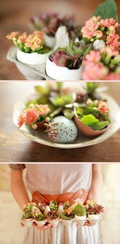 Succulents in Eggshells