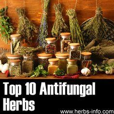 ❤ Top 10 Antifungal Herbs  ❤