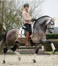 Matt Harnacke x Equestrian Stockholm?You can find Dressage horses and more on our website.Matt Harnacke x Equestrian Stockholm? Cute Horses, Pretty Horses, Horse Love, Beautiful Horses, Equestrian Outfits, Equestrian Style, Dressage Horses, Draft Horses, English Riding