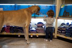 critters big and small...in a pet store. cute!! from Erin Vey