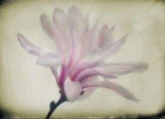 Cuadro Floral Dreams I