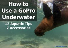 Want to prevent water drops on GoPro lenses? This post has some great ideas that really work. Don't let water drops ruin anymore of your GoPro photos! Gopro Diy, Gopro Camera, Leica Camera, Camera Nikon, Camera Case, Camera Gear, Gopro Photography, Underwater Photography, Diving