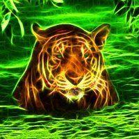 Animal Spirit Guides - Power Animals - Free Animal Oracle Message Cards - Personal Animal Spirit Guide Readings