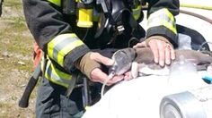Seattle firefighter revives puppy with oxygen mask