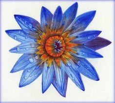 Prismacolor drawing.  Lotus. #Prismacolor.  #Lotus drawing.  #Colorpencil art.