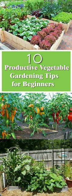 Look for the Book Square Foot Gardening, it is an authority on close spacing garden plants for maximum yield..