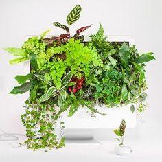 古いApple製品がスタイリッシュな植物アートに変身
