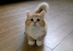Help. Too much cuteness in one cat.