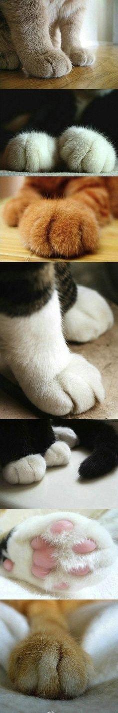 Me encantan las patitas de los gatos ♡