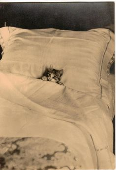 """Kitten tucked in bed.  Support """"Southern California Cat Adoption Tails"""" www.catadoptiontails.com"""