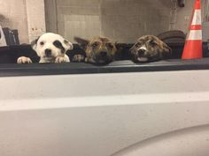JEFFERSON, Ohio-- The Ashtabula County Dog Warden is saying thank you to a few employees of the Conneaut Department of Public Works.  Two workersfound six puppieson state Route 7 near Welton Road at about 5 a.m. The dog warden said the pups look healthy, despite Thursday morning's frigid temperatures.