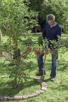 Vor allem junge Obstbäume entwickeln sich besser, wenn ihr Wurzelbereich frei von Bewuchs ist. Redakteur Dieke van Dieken zeigt Ihnen Schritt für Schritt, wie Sie eine Baumscheibe richtig anlegen.