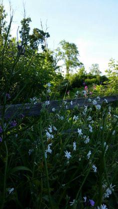 Pheasant Branch Middleton WI 06.06.15