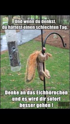 Lustig Schlechter Tag Schlechte Laune Eichhörnchen If you think you are having a bad day Squirrel Eggs Nuts