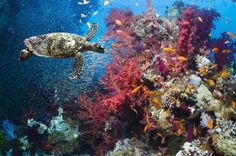 10 Important Marine Ecosystems: Coral Reef Ecosystem
