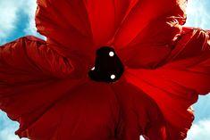 Criadas para proporcionar sombra durante o dia e iluminação durante a noite, essas flores interativas deixam a cidade de Jerusalém ainda mais bonita. Instaladas na praça Vallero, os quatro botões de rosa abrem e fecham de acordo com o fluxo de pedestres que passam por debaixo de suas enormes pétalas vermelhas. Desenhadas pelo HQ Architects, as esculturas públicas têm 9 metros de altura e trazem uma sensação de encolhimento em quem opta por caminhar abaixo e ao redor suas flores.