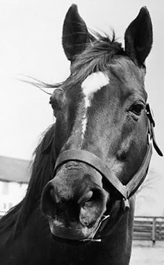 4. Man O' War was a one in a million horse... Red was my childhood dream horse <3