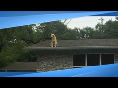 Family Posts Perfect Sign Explaining Why Their Dog Is on the Roof - YouTube