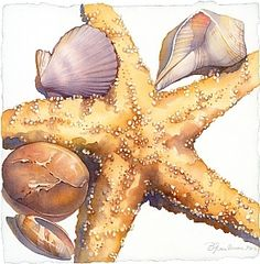 A Gift of the Sea #3 by Barbara Groenteman Watercolor ~ x