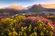 """Tasmanian Wilderness - A brilliant display of wildflowers near Twisted Lakes at Cradle Mountain-Lake St Clair National Park, Tasmania.  <a href=""""http://www.jarrodcastaing.com/workshops"""">Photo Workshops & Tours</a>   <a href=""""http://www.facebook.com/JarrodCastaingPhotography"""">Facebook</a>   <a href=""""http://instagram.com/jarrodcastaing"""">Instagram</a>   <a href=""""http://plus.google.com/105952873270340596947"""">Google+</a>  <a href=""""http://www.jarrodcastaing.com/gallery"""">Buy a Print</a>    <a h..."""